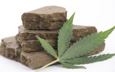 A Brief Overview of Hashish